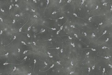 Spermacellen onder de microscoop - vruchtbaarheid man
