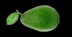 Je baby is na 16 weken zo groot als een avocado