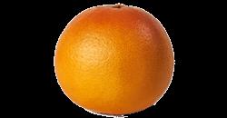Je baby is na 23 weken zwanger zo groot als een grapefruit