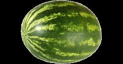Je baby is na 39 weken zwanger zo groot als een watermeloen