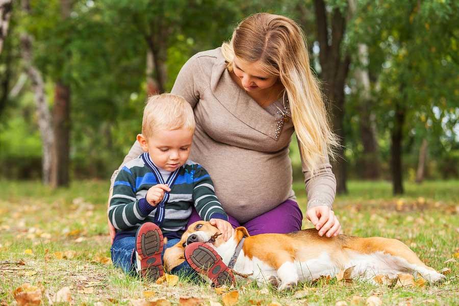 Zorgverzekering 2016 - wat verandert er als je zwanger bent