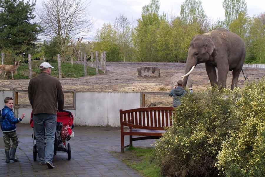 Olifanten bekijken in Dierenrijk