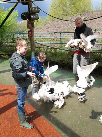 Twee jongetjes voeren vogels in Dierenrijk