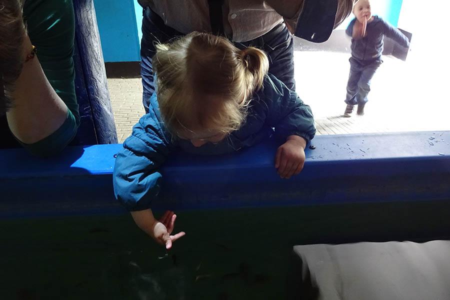 meisje heeft interactie met kriebelvisjes in Dierenrijk