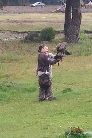 meisje heeft roofvogel op arm bij roofvogelshow beekse bergen
