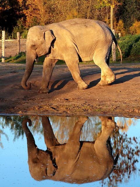 olifantje dierenrijk