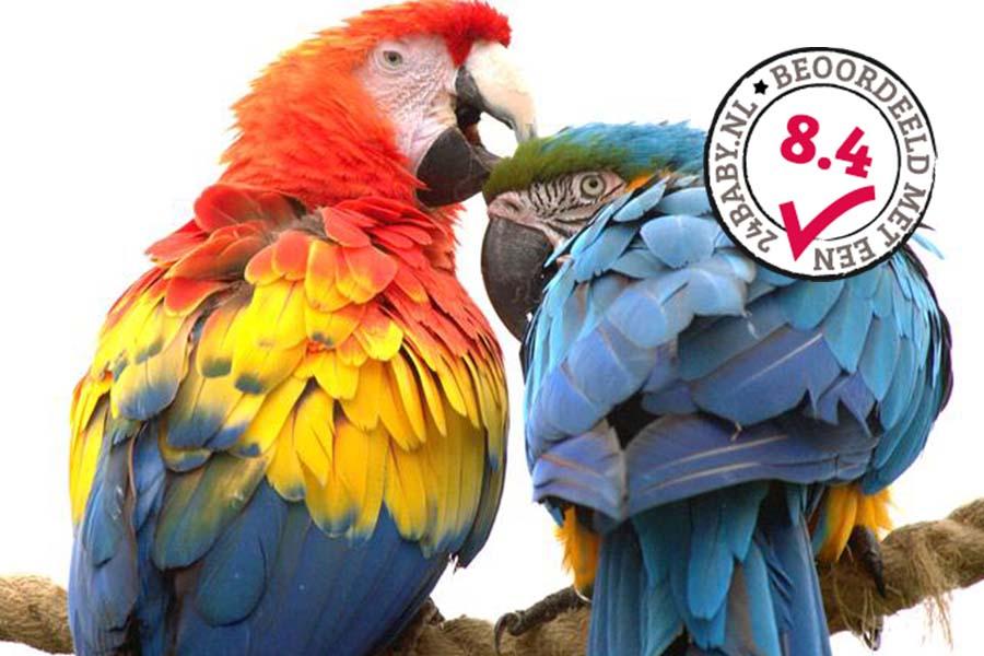papagaaien in Dierenrijk
