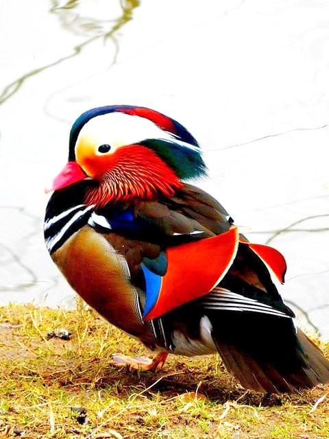 vogel dierenrijk