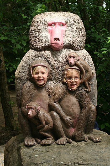 apen in safaripark beekse bergen