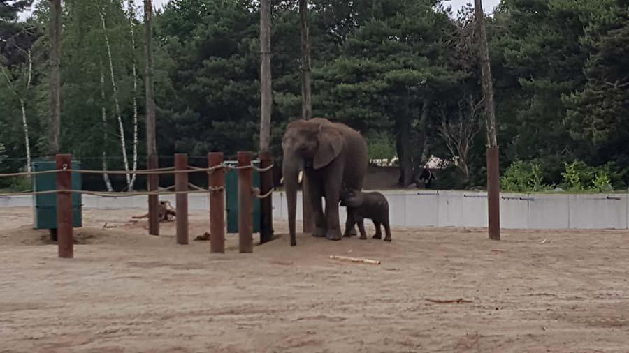 olifanten in safaripark beekse bergen