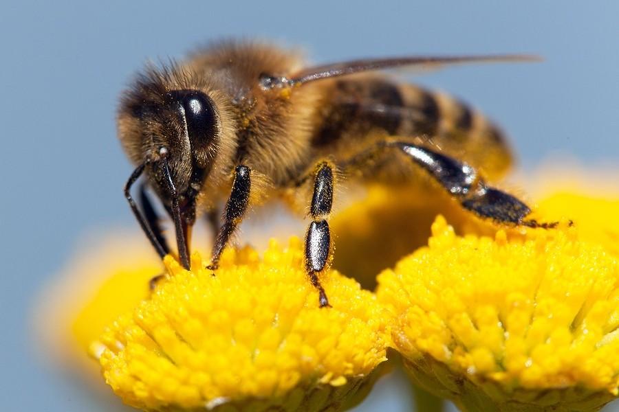 insectenbeet herkennen baby - bij