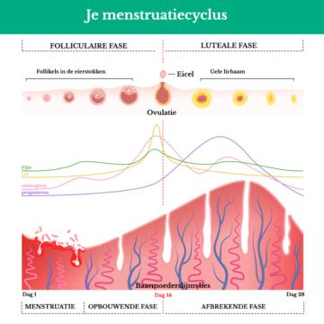 Invloed oestrogeen en progesteron op de menstruatiecyclus