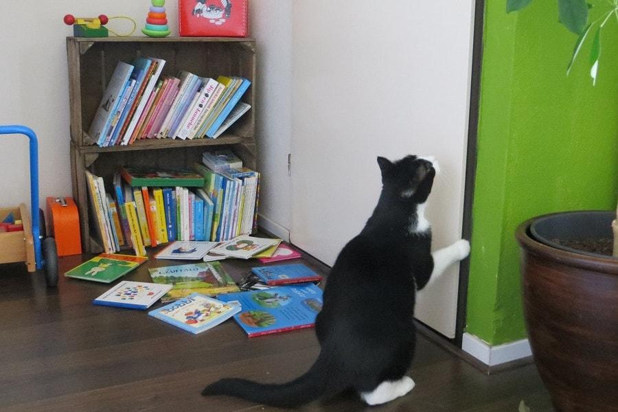 Kat zit bij kinderboeken