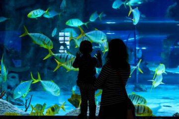 Moeder en peuter in het aquarium